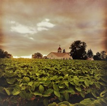 saint peters soybeans